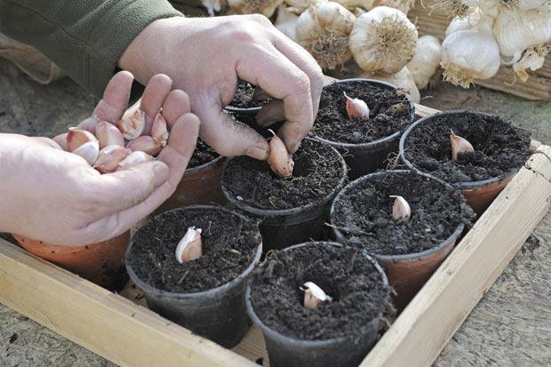 بهترین گیاه دارویی برای پرورش در خانه