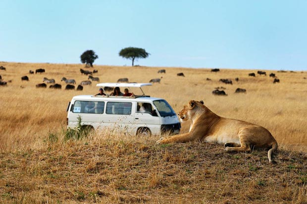 expeience-wilderness-kenya-african-safaris-tourist-attractions-141613985