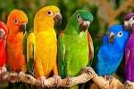 رنگ شخصیت personality-color