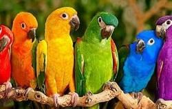 رنگ شخصیت شما چیست؟