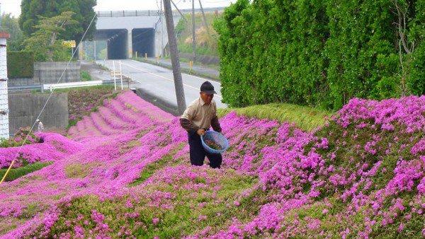 کاشت باغ گل به خاطر لبخند همسر