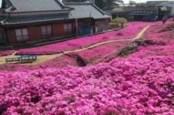 کاشتن یک باغ گل به خاطر لبخند همسر!+عکس