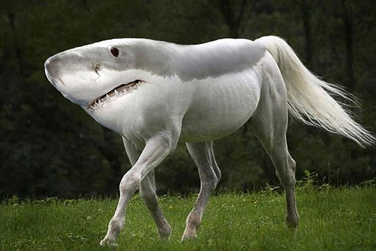 عكس های فتوشاپی دیدنی از حیوانات