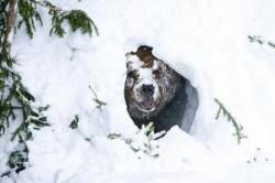 دلیل خواب زمستانی خرسها چیست؟