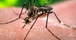 ویروس زیکا چیست و چرا اینقدر جدی است؟