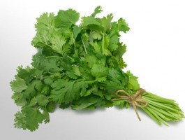 جعفری Parsley