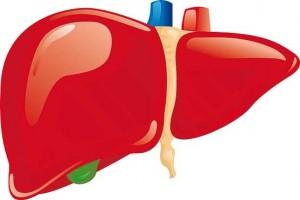کبد چرب liver