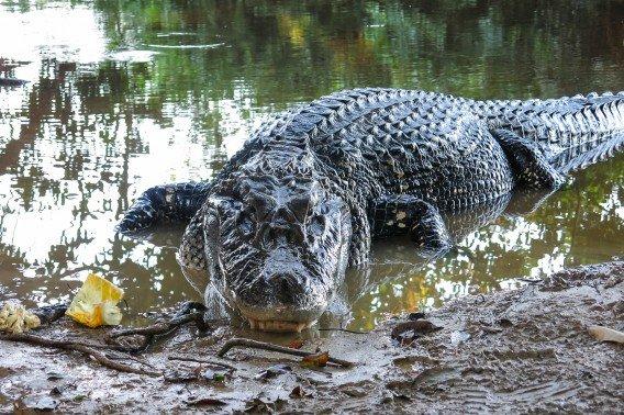 موجودات ترسناک آمازون