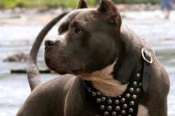 سگ آدمخواری که نگهداری آن در ایران ممنوع نیست!