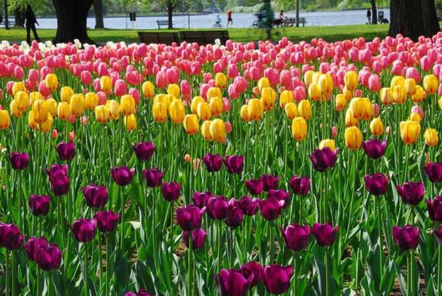 10 مکانی که در بهار به کمال زیبایی می رسند