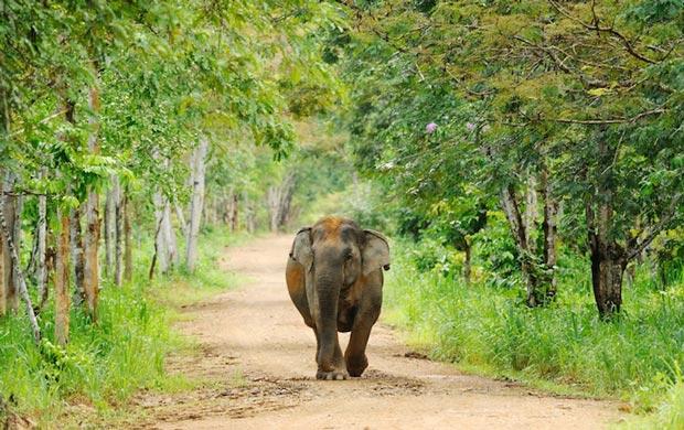 پارک ملی کوی بوری-kui_buri_national_park