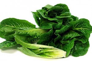 خواص کاهو Lettuce