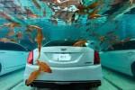 خودرویی که زیر آب خیس نمی شود