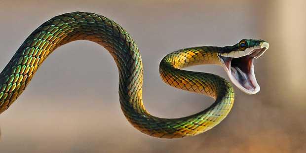 اسرار مارها snake