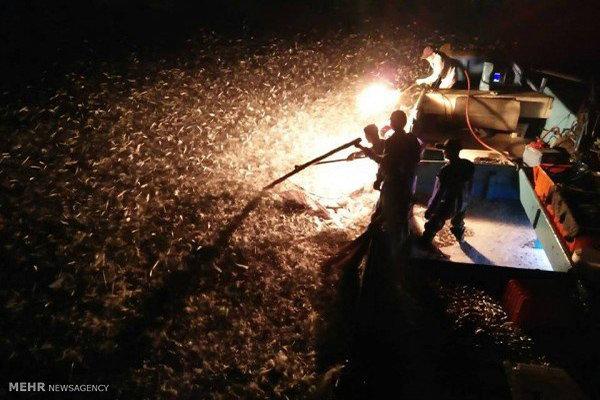 ماهیگیری با آتش