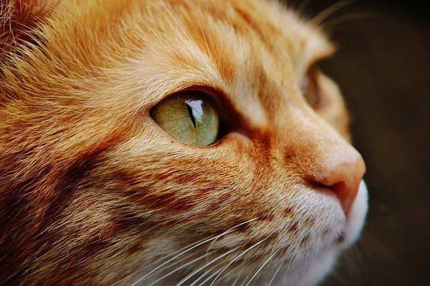 گربه cats-cancer