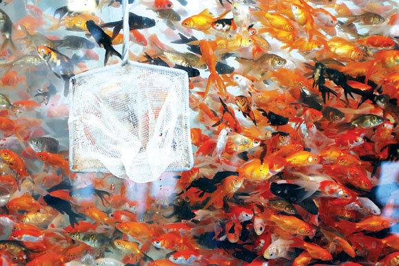 کسب درآمد پرورش ماهی