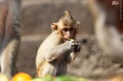 ضیافت میمونها در تایلند برای جذب گردشگر