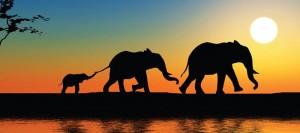 سافاری safari