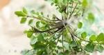 گیاهان خانگی برای زیبایی و جوانی پوست