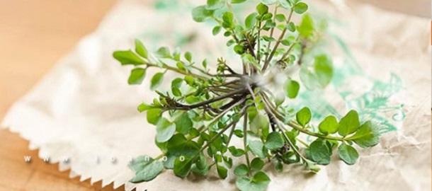 گیاهان دارویی برای پوست و زیبایی