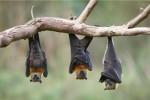 دانستنیهای جالب درمورد خفاشها