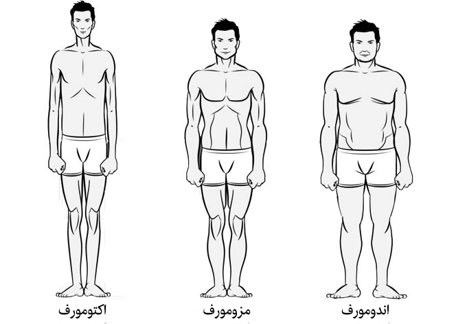 انواع تیپ بدنی در بدنسازی