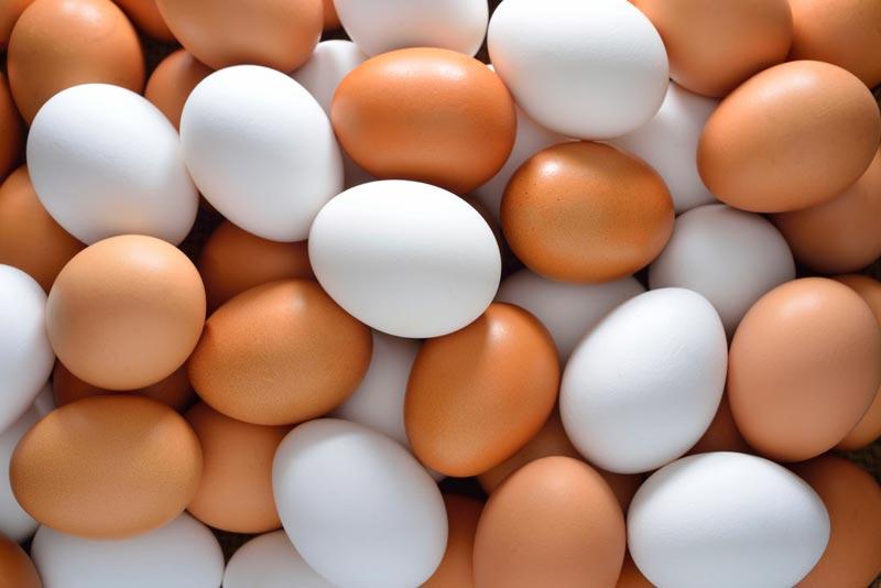 خواص تخم مرغ egg