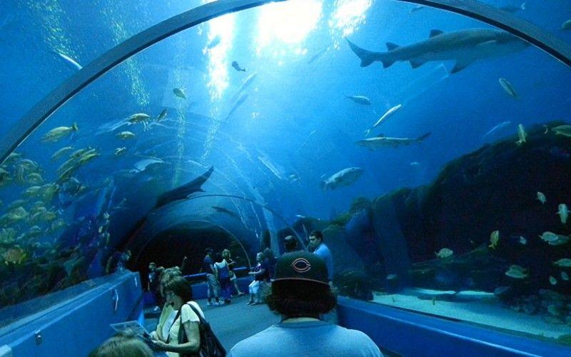 georgia-aquarium-3