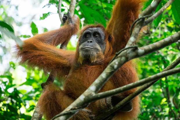 حیات وحش مالزی malaysia_wildlife
