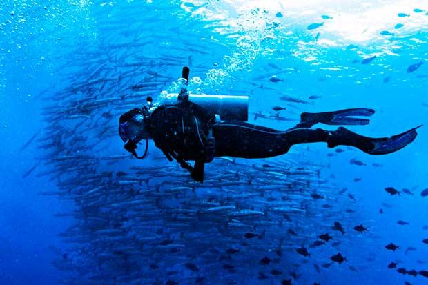 غواصی در مالزی malaysia_diving