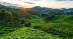 جاهای دیدنی و جاذبه های توریستی مالزی