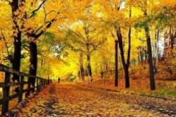 طبیعت پاییزی ایران؛ زیباترین جاهای ایران در پاییز