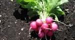 بهترین سبزیجات برای کاشت در سرمای پاییز و زمستان