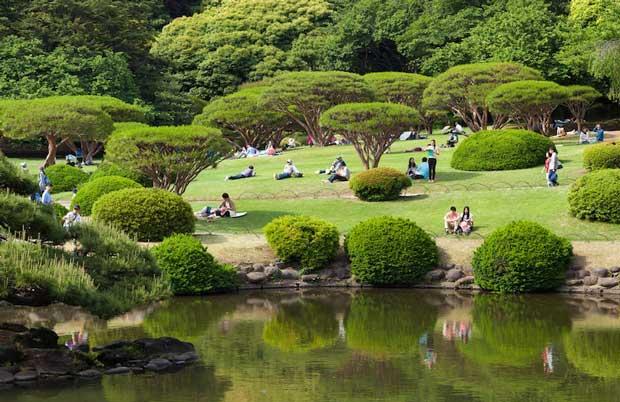 جاهای دیدنی توکیو,باغ ملی Shinjuku Gyoen