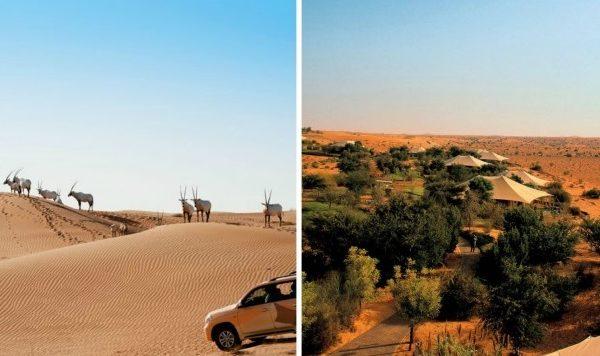 دوحه قطر - al-maha-santuary-doha-780x390-600x356