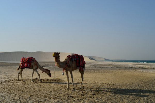 دوحه قطر - desert-safari-in-doha-qatar-780x517-600x400