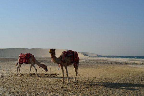دوحه قطر - desert-safari-in-doha-qatar-780x517-600x400