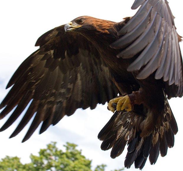 دیدن عقاب در خواب