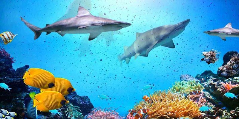isfahan-aquarium-2