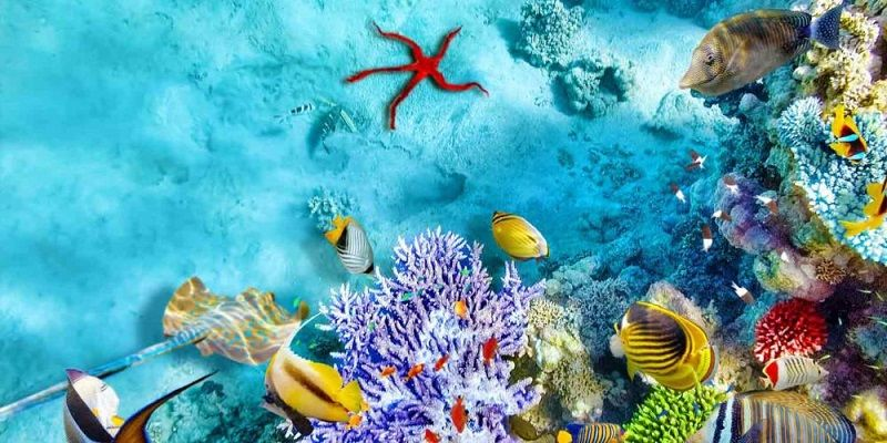 isfahan-aquarium