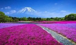 10 دلیل عالی برای سفر گردشگری به ژاپن