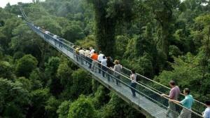macritchie-treetop-walk