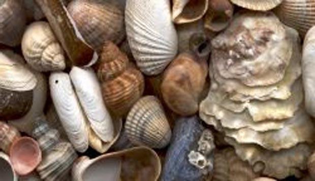 selection_of_seashells