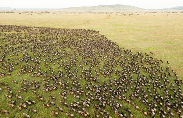 great-wildebeest-migration-746556-1463597114-640x0c-600x389