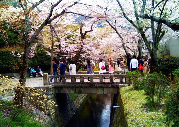 دیدنی های کیوتو ژاپن,محل پیاده روی فیلسوفان-philosophers_walk
