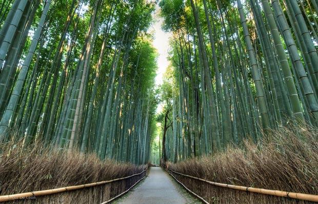 دیدنی های کیوتو ژاپن,جنگل بامبوی Arashiyama