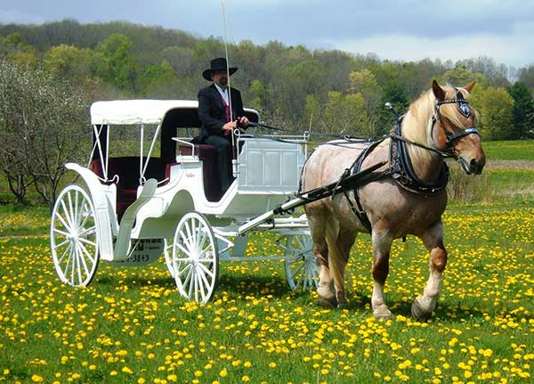 Wedding-Horse-and-Carriage