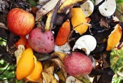 نحوه ساخت کود ارگانیک از پسماندهای میوه ها و سبزیجات