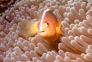 لیست زیباترین جزایر و سواحل اندونزی